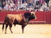 Toro en la arena. toro castaño — Foto de Stock