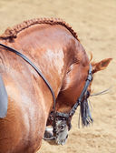 Portrait of spanish beautiful horse in move behind — Stock Photo