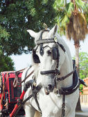 Carriage white horse in Jeres, Spain — Stock Photo