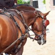 Beautiful breed carriage  horses in Andalusia looking behind,  S - Stockfoto