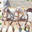 Beautiful breed carriage horses in Andalusia, Spain — Stock Photo #10916558