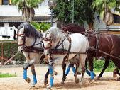 Przewozu koni w andaluzja, hiszpania — Zdjęcie stockowe