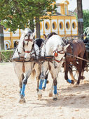 Beautiful breed carriage horses in Royal Andalucían School of Equestrian Art ,Jerez, Spain — Stock Photo