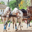 Stock Photo: Beautiful breed carriage horses in Andalusia, Spain