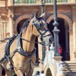 Carriage nice horse in move,  Seville (Plaza de Espana),  Spain - Stock Photo