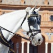 Portrait of carriage white horse in Seville (Plaza de Espana), - Stock Photo