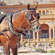Portrait of carriage bay horse in Seville (Plaza de Espana),  Sp - Stock Photo