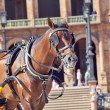 Portrait of carriage bay horse in Seville (Plaza de Espana),  Sp — Stock Photo
