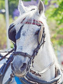 Portrait of nice carriage white horse in move, Spain — Stock Photo