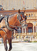 Portrait of carriage bay horse in Seville (Plaza de Espana), Sp — Foto Stock