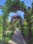 Boog van roses in het alhambra paleis tuinen, granada, spai — Stockfoto