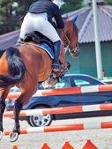 Bucht pferd im sprung blick hinter wolkigen tag springen — Stockfoto