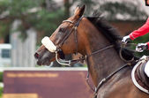 Portrait of sportive horse during competition — Stock Photo