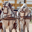 Beautiful breed carriage  horses in Andalusia,  Spain - Stock Photo