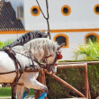 Beautiful breed carriage  horses in Andalusia,  Spain. - Stock Photo