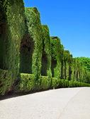 Spanish Garden - Alhambra garden from Granada in Andalusia — Stock Photo