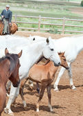 Horses herd with little foal at spanish farm. Andalusia. Spain — Stock Photo