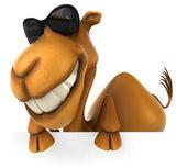 Fun camel — Stock Photo