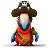 Parrot pirate — Stock Photo