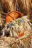 成熟小穗的小麦和在篮子里的野花 — 图库照片