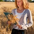 Stock Photo: Woman agronomist with document analyzing wheat ears