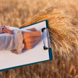 Empty paperwork, pen and ears wheat in women's hands — Stock fotografie