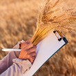 Empty paperwork, pen and golden ears wheat in women's hands — Stock Photo
