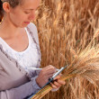 Royalty-Free Stock Photo: Woman agronomist writes results of his experiment in the wheat field