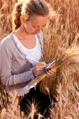 Young woman agronomist or a student analyzing wheat ears — Stock Photo