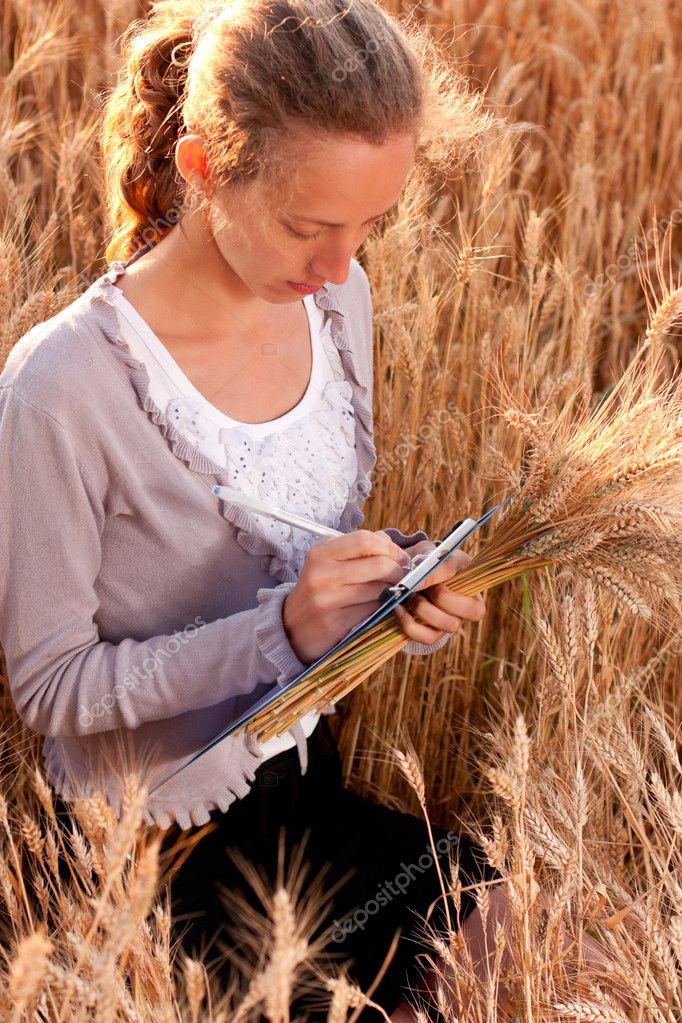 Young woman agronomist or a student with document and ears wheat in hand writes results of her experiment in the wheat field  Stock Photo #11526636