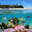 Beach and coral reef — Stock Photo
