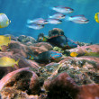 Hard coral reef — Stock Photo