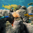 Hard coral and colorful fish — Stock Photo