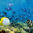 Shoal of tropical fish over a coral reef — Stock Photo