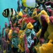Vibrant colors of sealife — Stock Photo