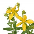 Flowers of Hypericum (Latin Hypericum) — Stock Photo