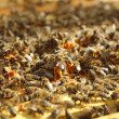 Stock Photo: Honey Bees
