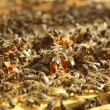 Honey Bees — Stockfoto #10916032
