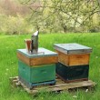 Foto Stock: Beehives