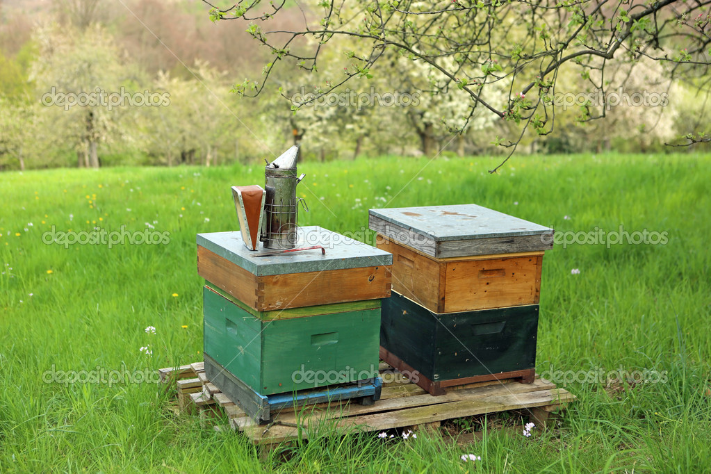 Beehives in Nature. Germany  Stock Photo #10916253