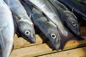 獲れた新鮮な魚 — ストック写真