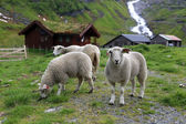 Norwegian Landscape — Stock Photo