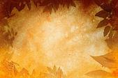 Grunge leaf background — Stock Photo