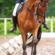 Dressage — Stock Photo