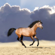 Stallion — Stock Photo