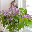 Royalty-Free Stock Photo: Lilac at a window