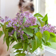 Lilac at a window — Stock Photo