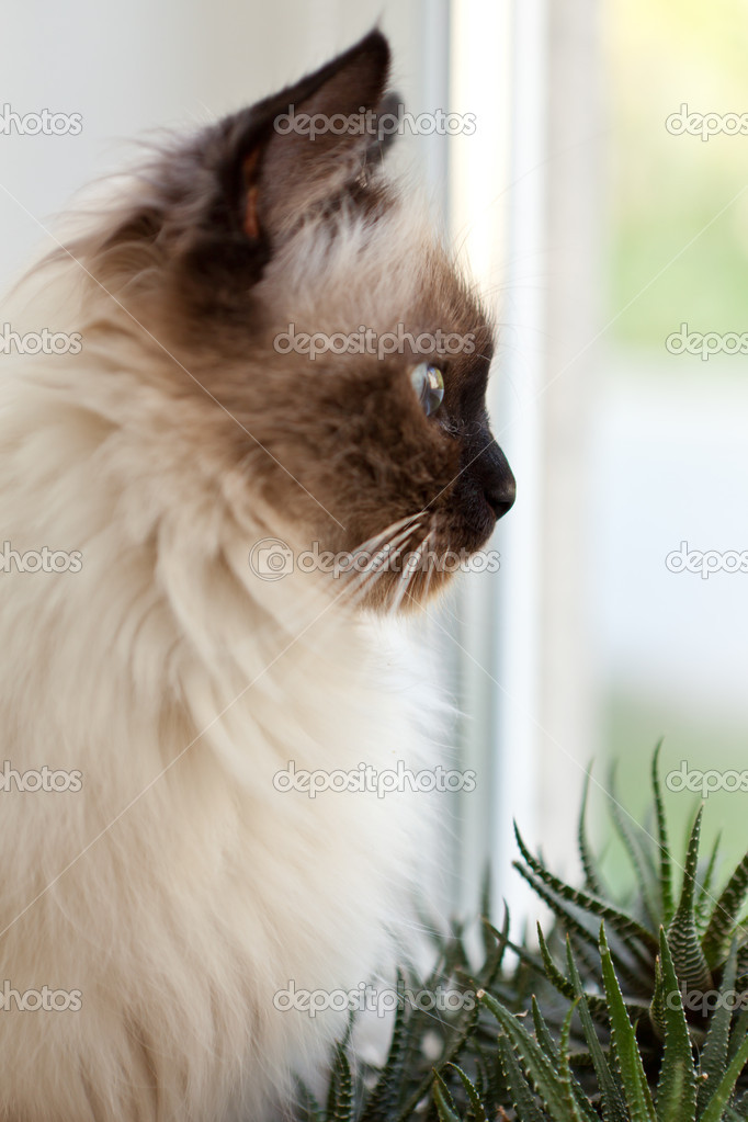 Cat at a window — Stock Photo #11380003