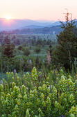 Pôr do sol de verão com flores silvestres — Foto Stock