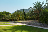 Summer park with palm trees (Montenegro) — Foto Stock